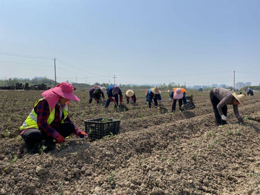 发展特色种植业 助贫困户增收
